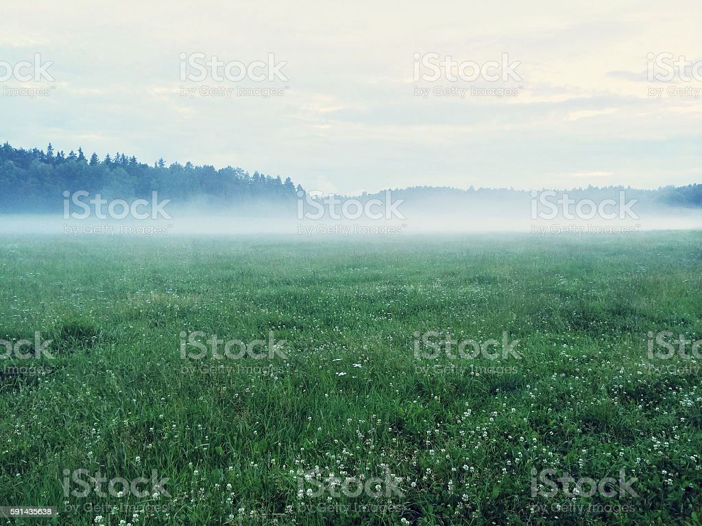Dreamy green meadow with wild clover stock photo