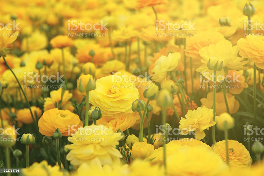 dreamy photo with low angle of spring flowers stock photo