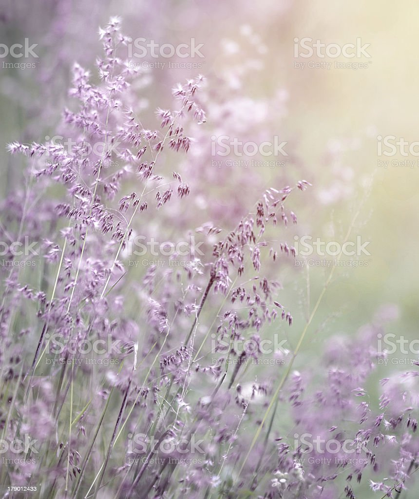 Dreamy pink flowers field royalty-free stock photo
