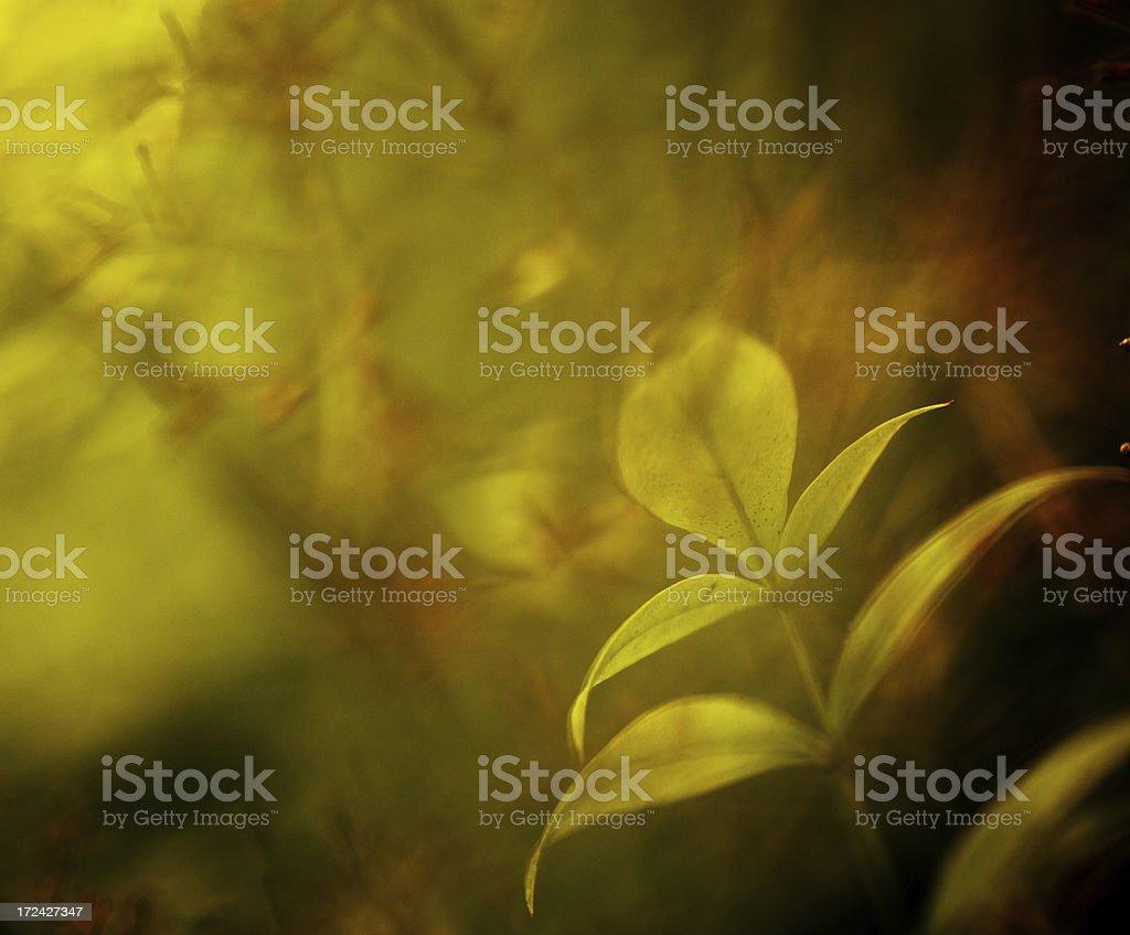 Dreamy plants royalty-free stock photo