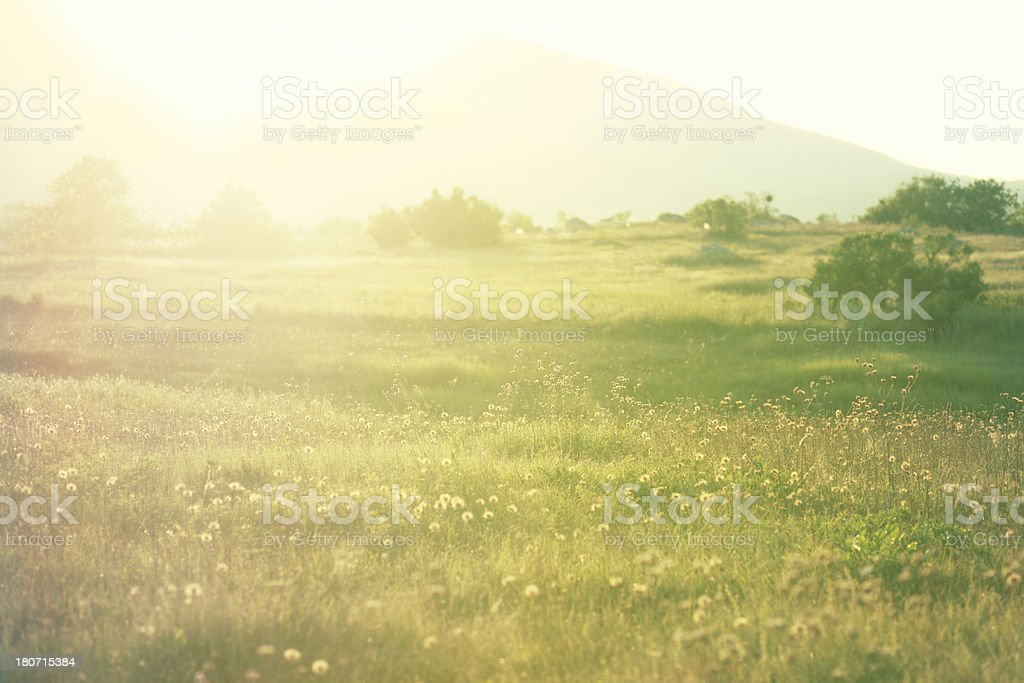 Dreamy summer meadow royalty-free stock photo