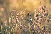 Dreamy sunny atmosphere of summer meadow in detail