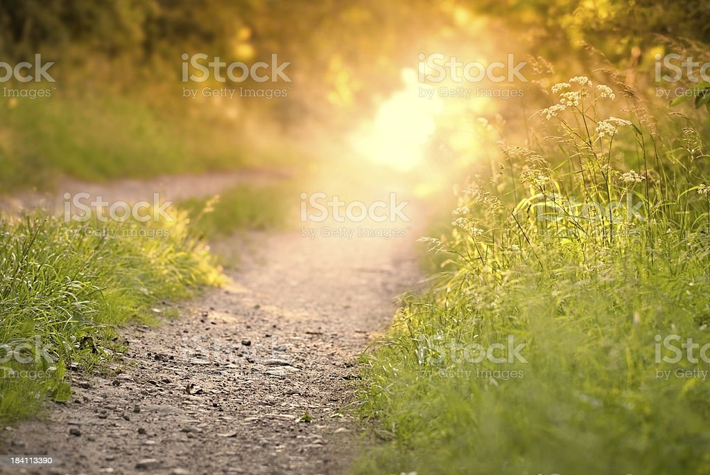 Dreamy walk in the evening light stock photo