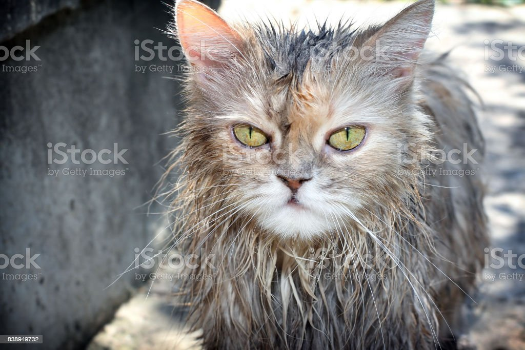 Drenched cat stock photo