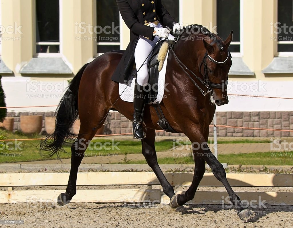 Dressage horse and rider in action stock photo