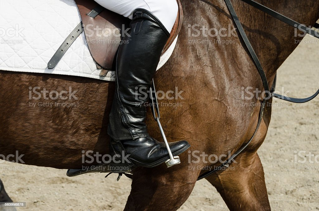 dressage horse and rider stock photo