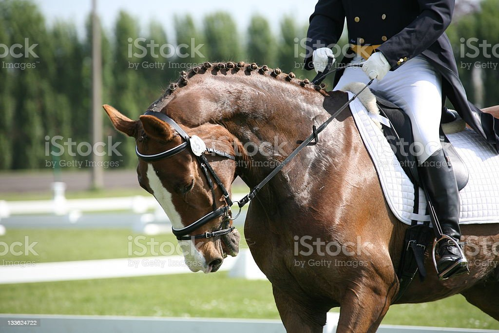 Dressage horse in competition royalty-free stock photo