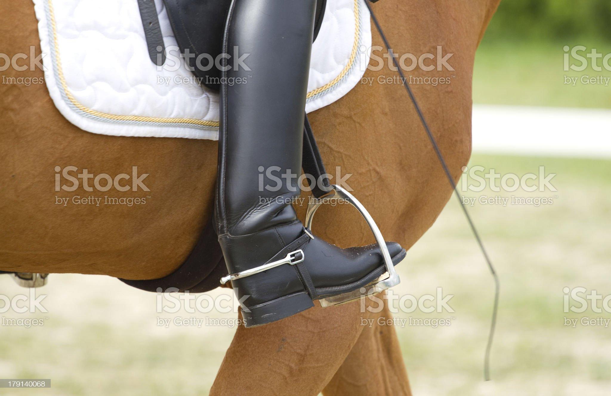 Dressage horse royalty-free stock photo