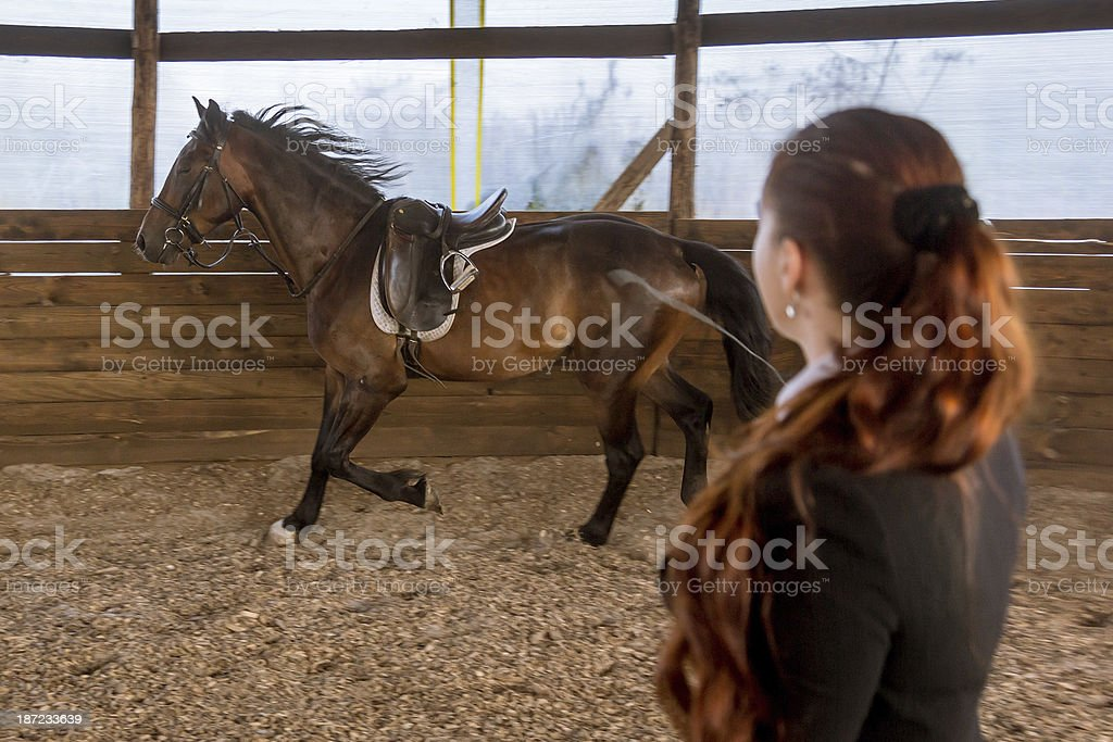 Dressage Horse Riding royalty-free stock photo