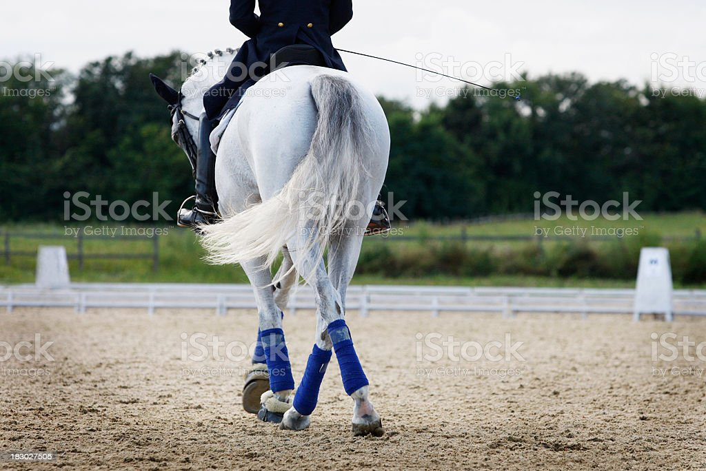 Dressage horse with jockey in jumping course stock photo
