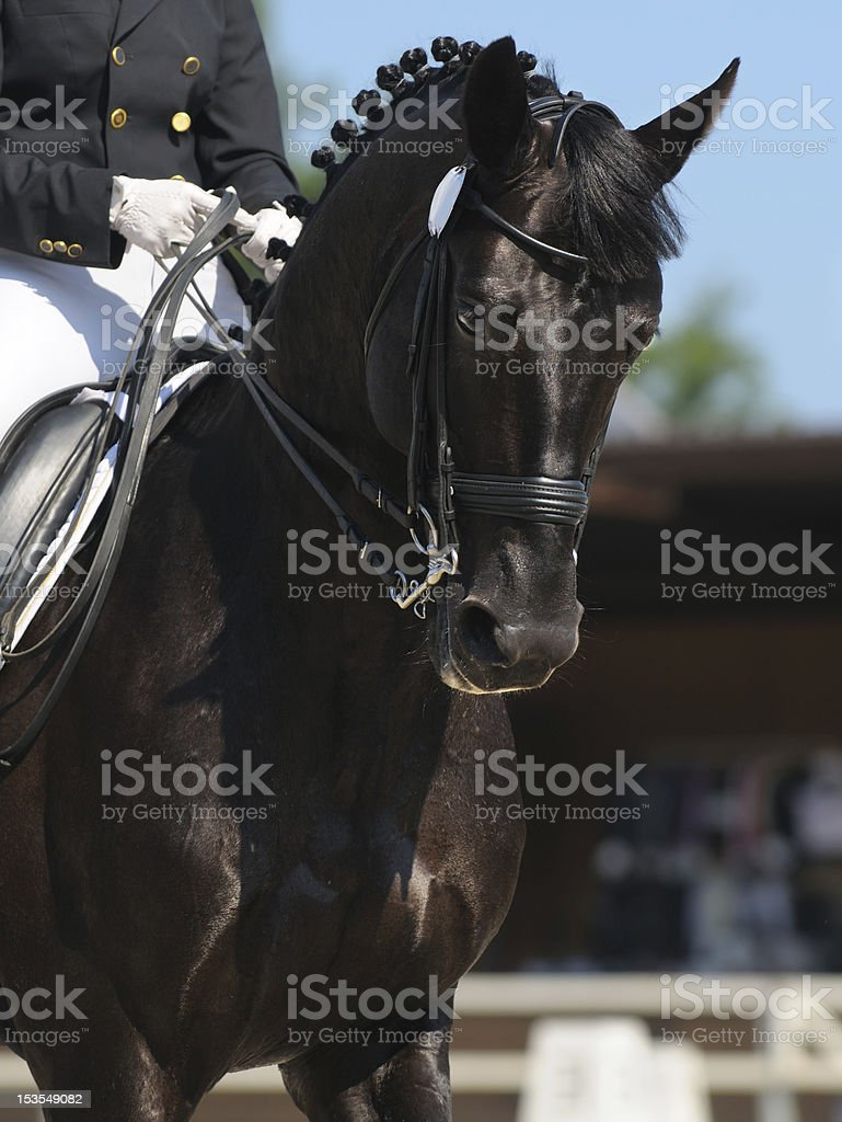 Dressage: portrait of black horse stock photo