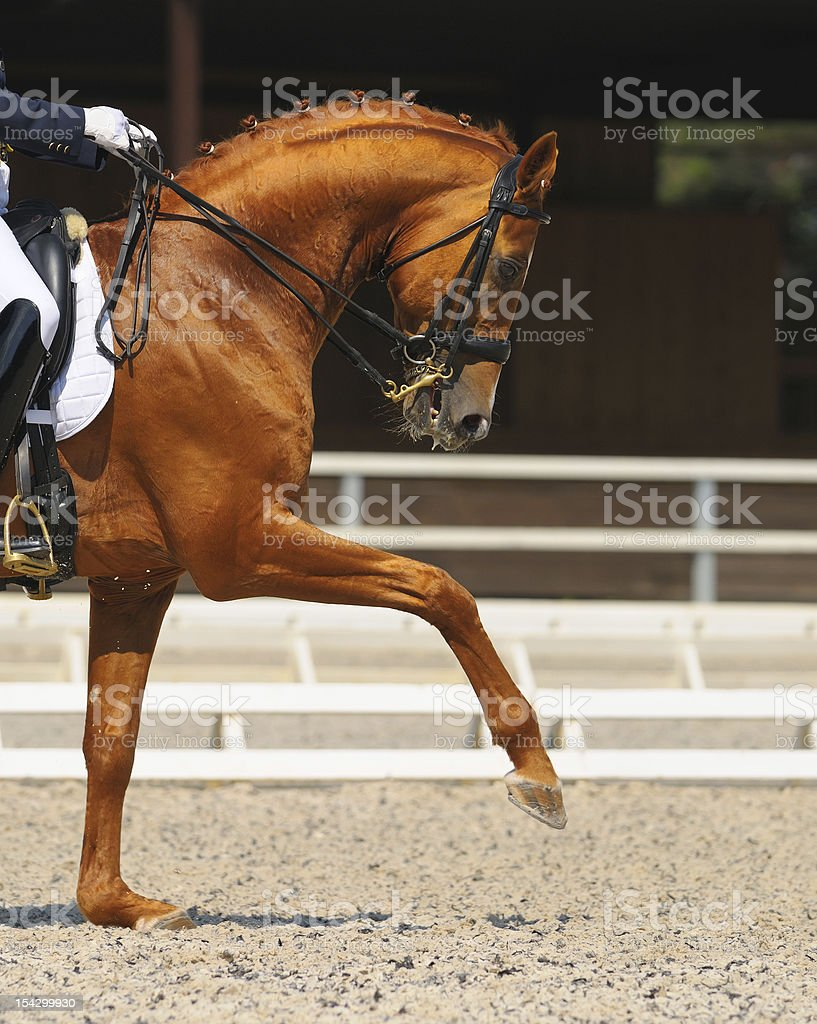 Dressage: portrait of sorrel horse stock photo