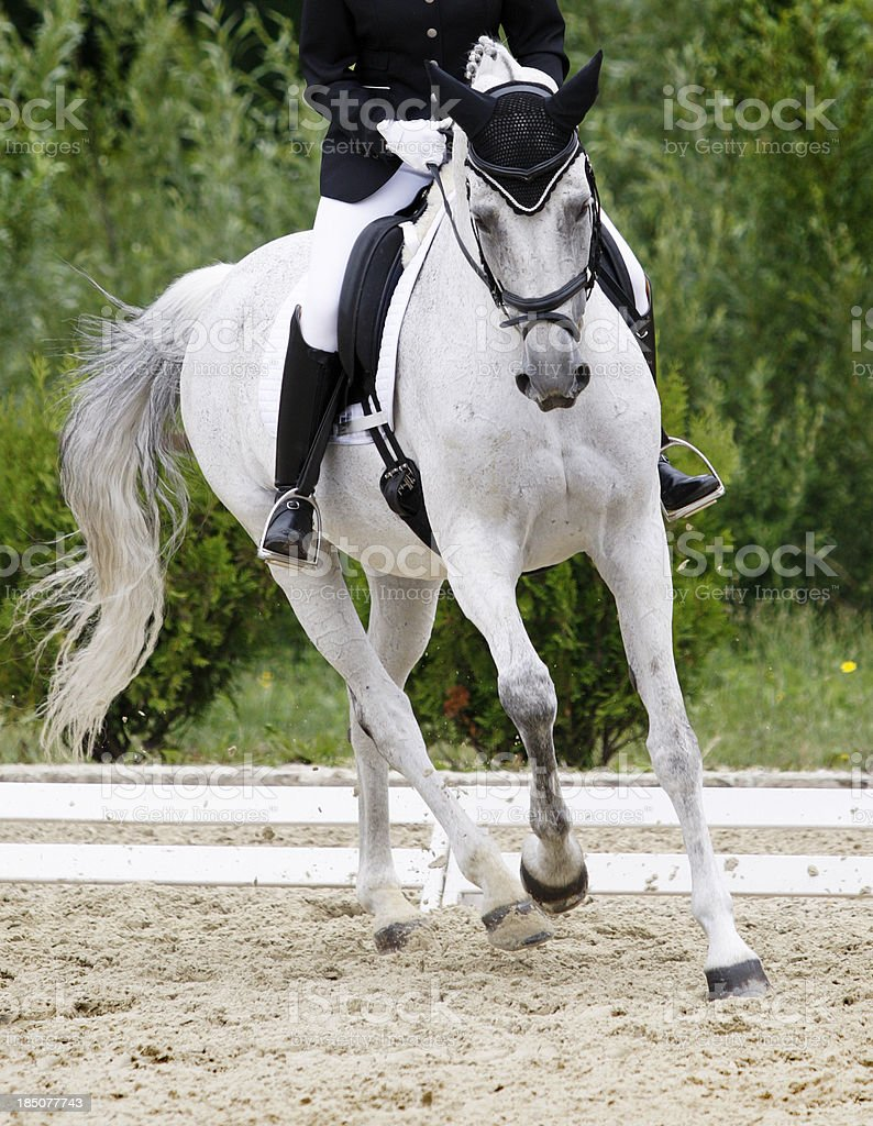 Dressage scene stock photo