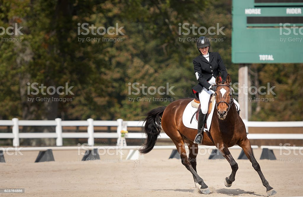 Dressage test stock photo