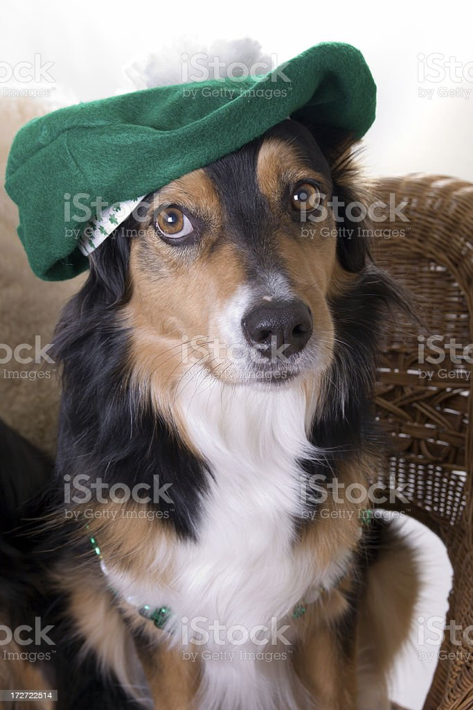 Dressed for St. Paddy's Day stock photo