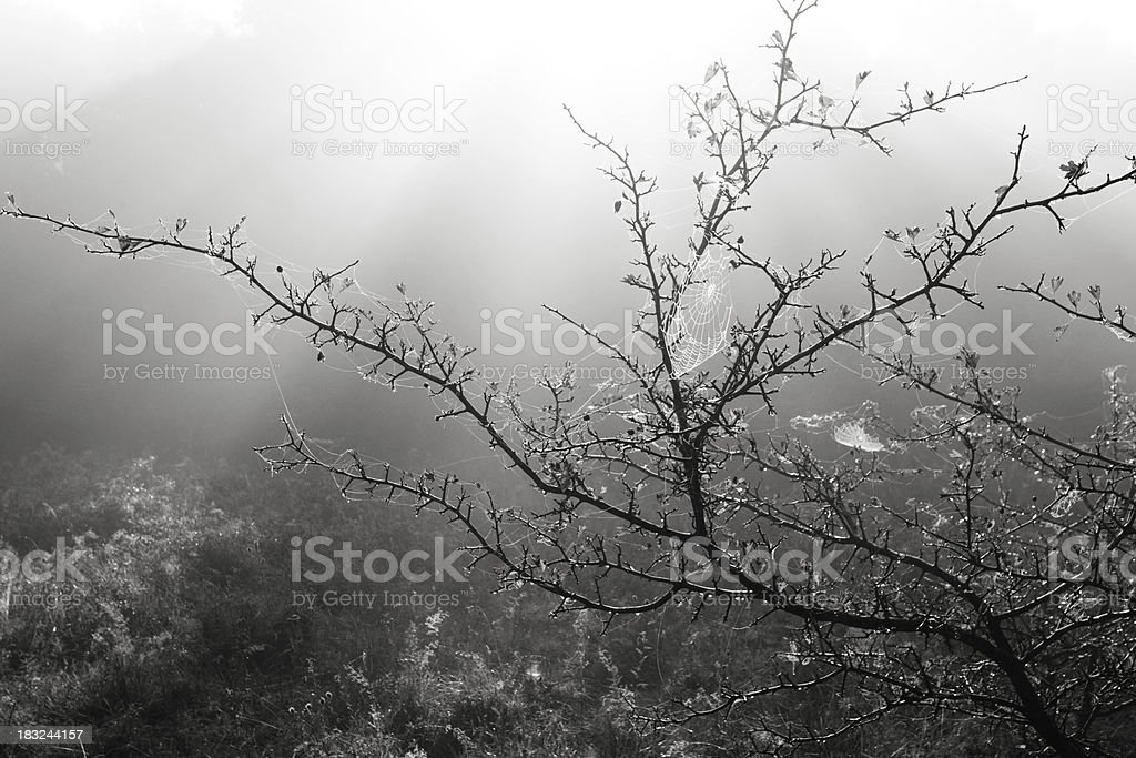 dressed up in the morning royalty-free stock photo