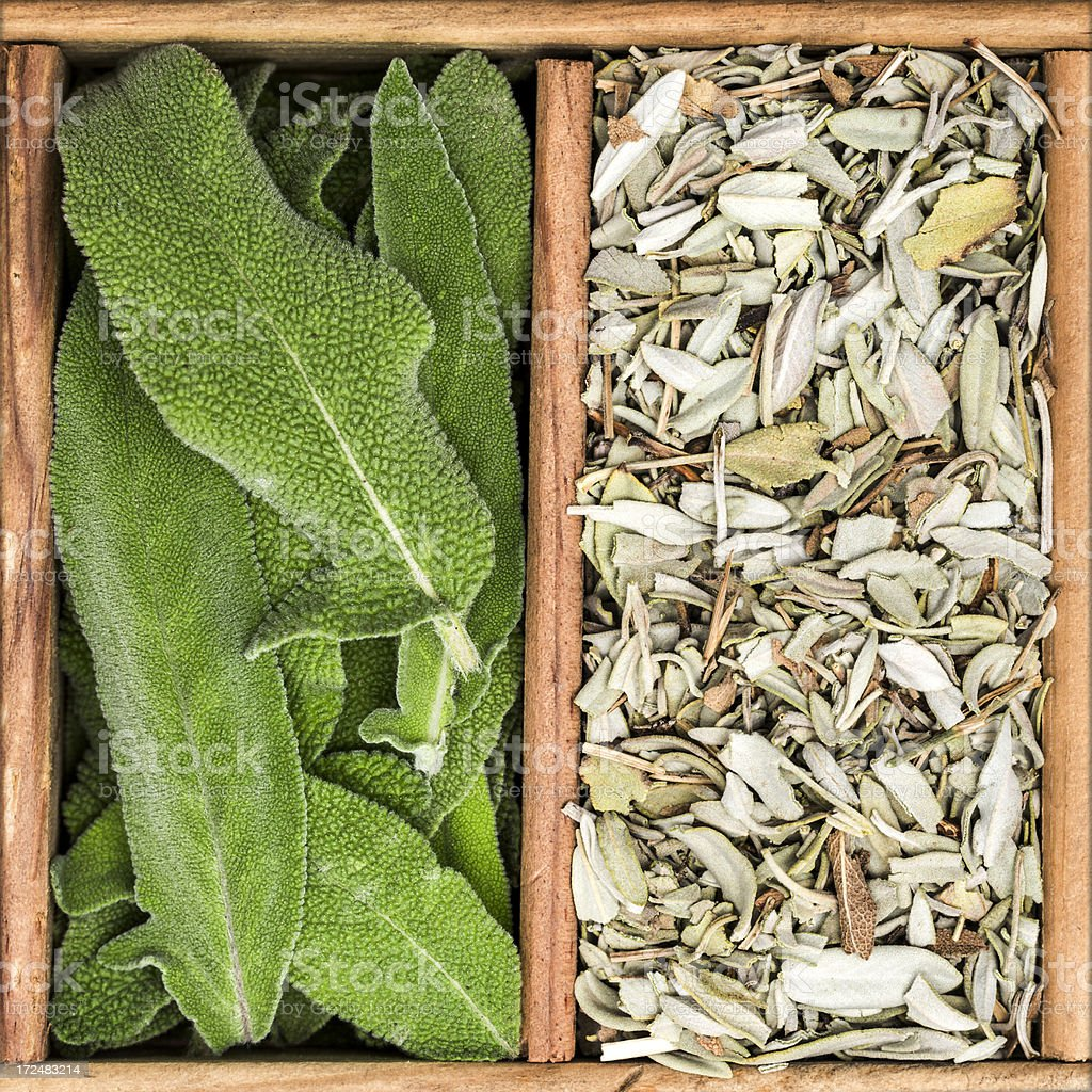 Dried and fresh sage royalty-free stock photo