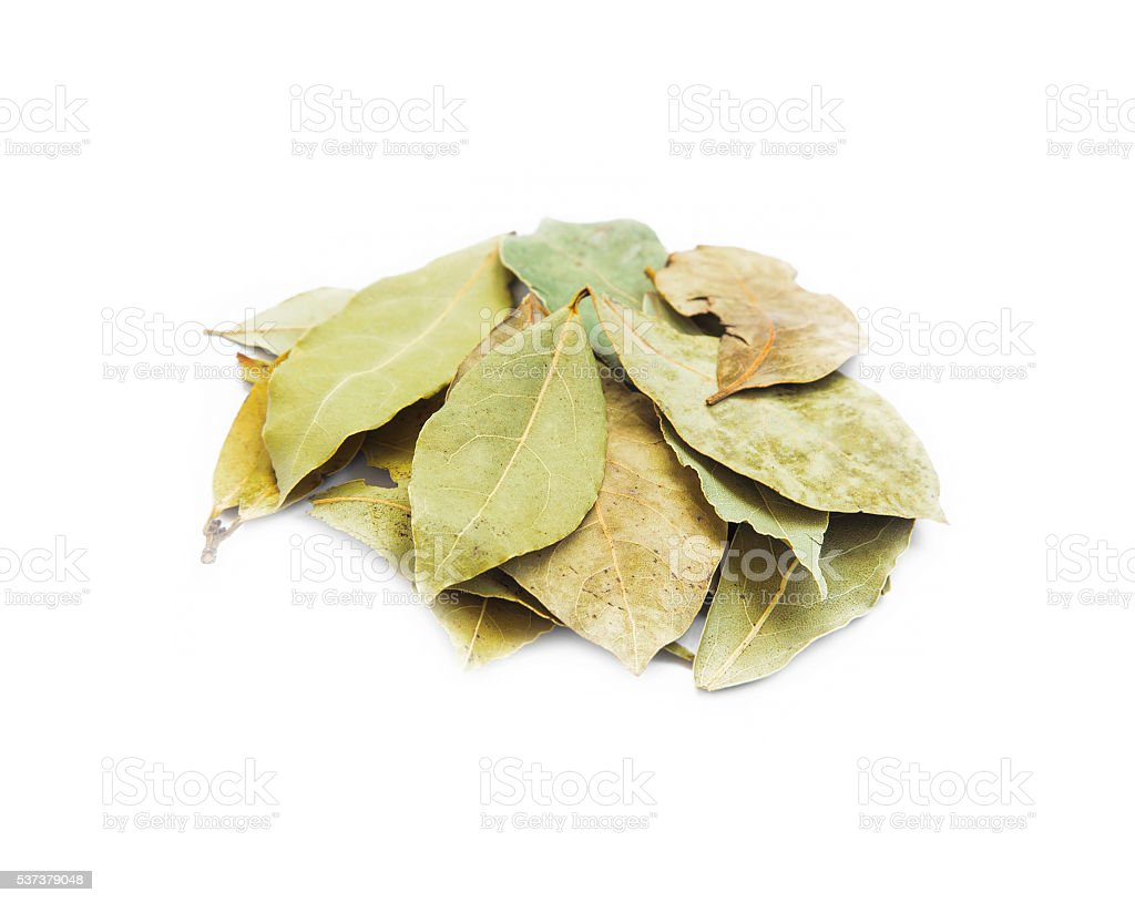 Dried aromatic bay leaves isolated stock photo