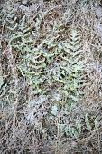 Dried autumn grass