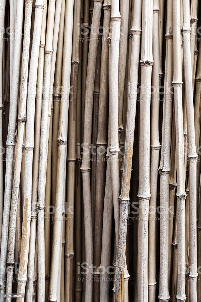 dried bamboo stem stock photo