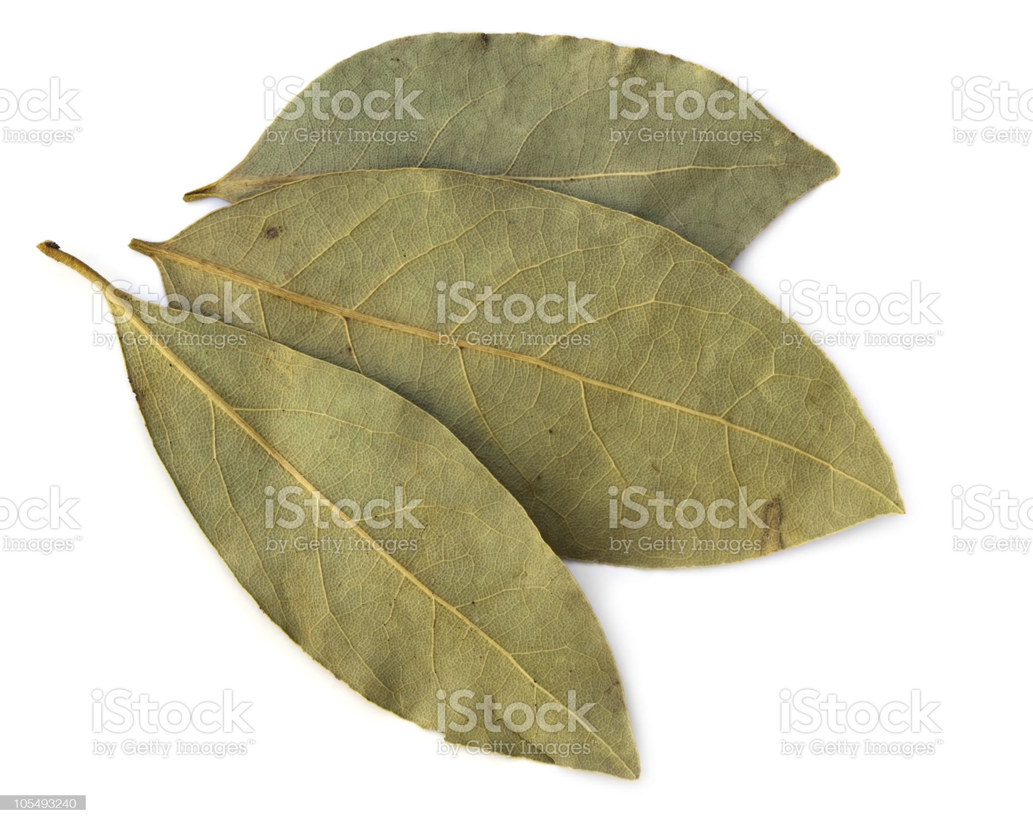 Dried Bay leaves royalty-free stock photo