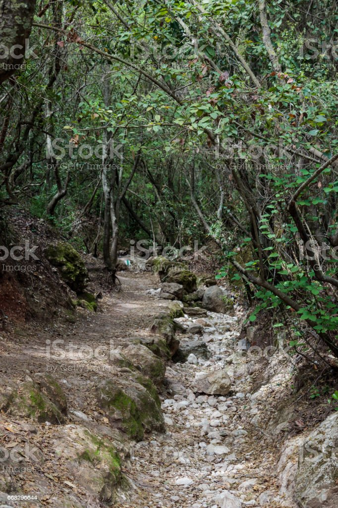 Dried bed of stream between trees in national park stock photo