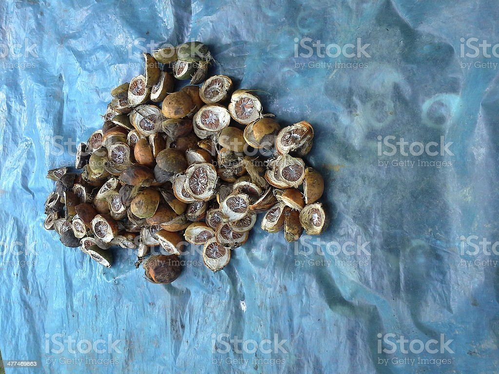 Dried Betel Nut royalty-free stock photo