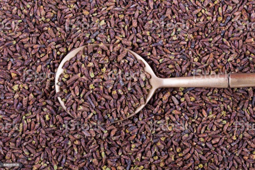 Dried birch buds , close up stock photo