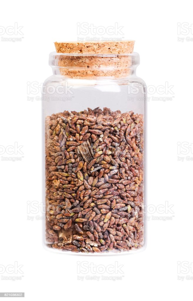 Dried birch buds in a bottle with cork stopper for medical use stock photo