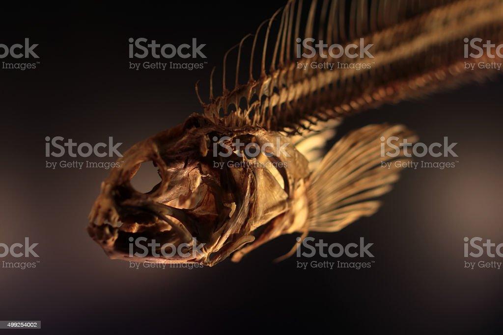Dried boned fish skeleton stock photo