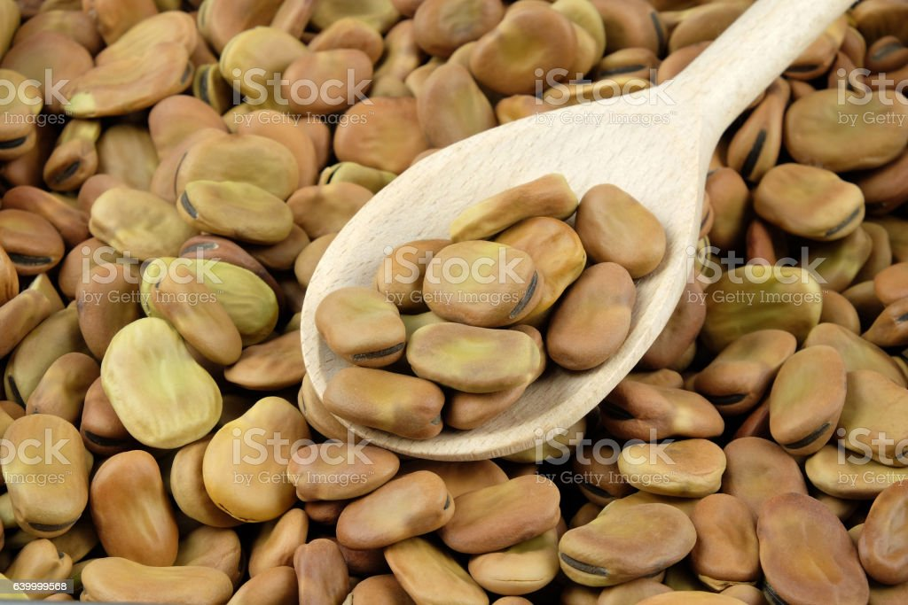 Dried broad beans on a wooden spoon. stock photo