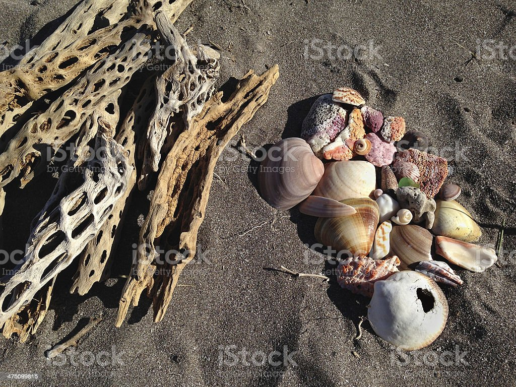Dried Cactus and Shells royalty-free stock photo