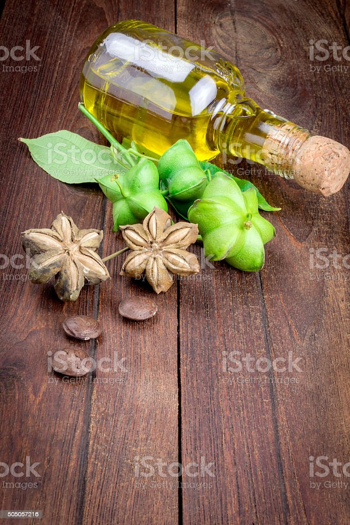dried capsule seeds fruit of sacha-Inchi peanut stock photo