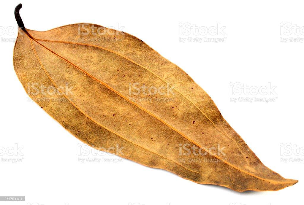 Dried cassia leaf stock photo