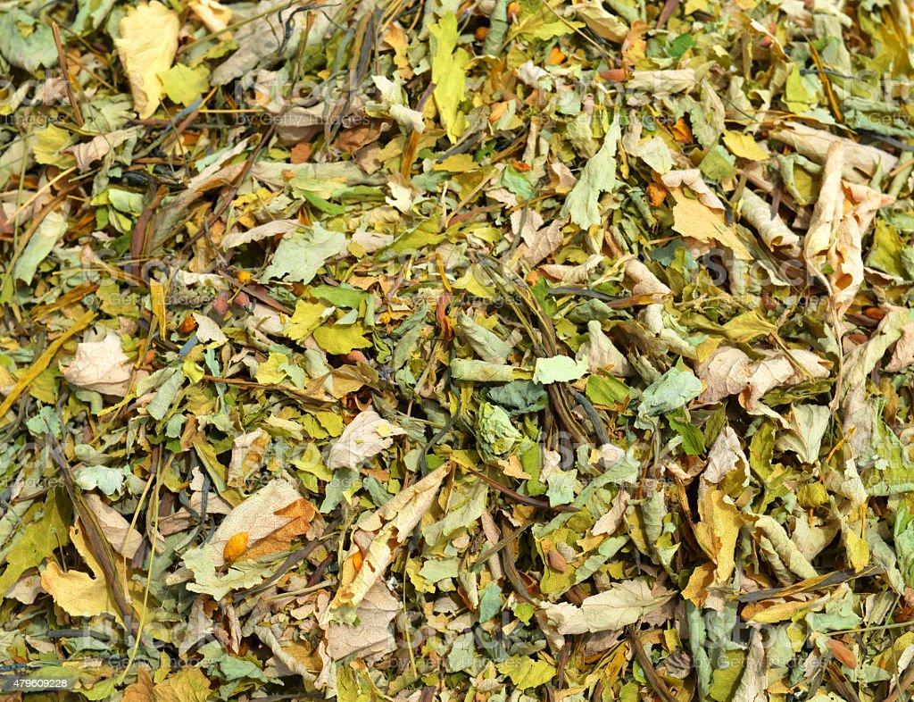 Dried Celandine stock photo