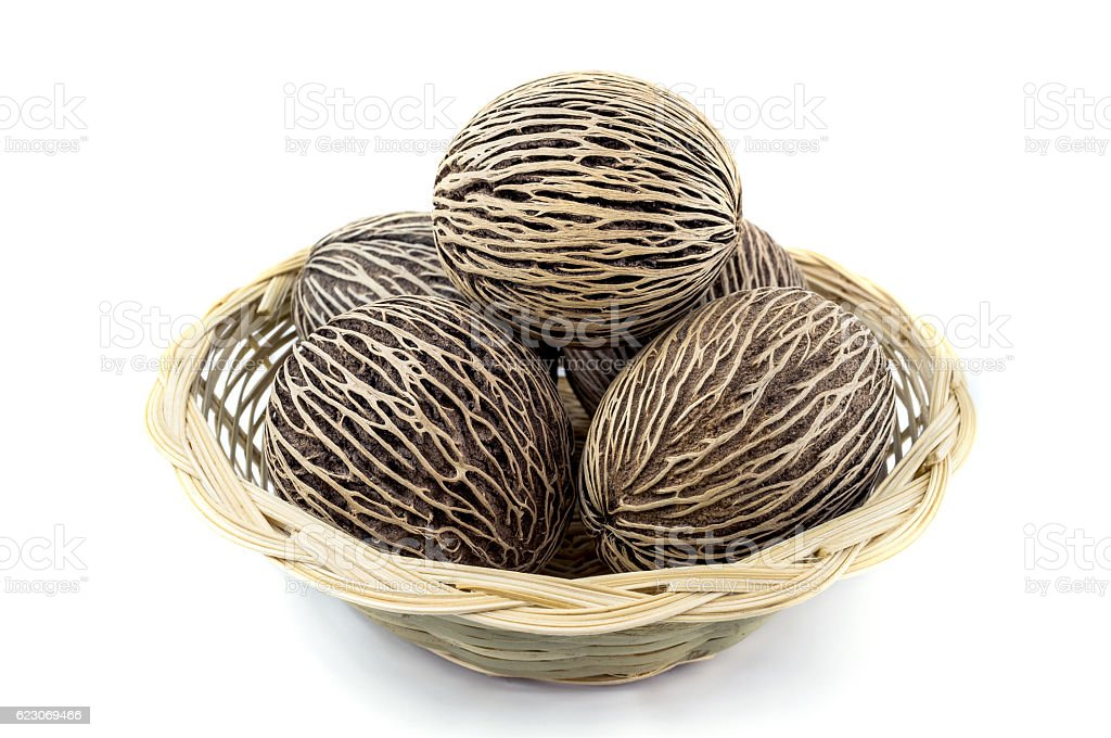 dried cerbera oddloam's seed, pong pong seeds. stock photo