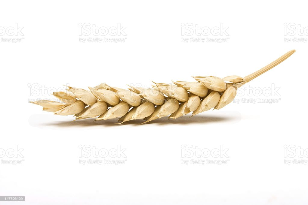 Dried Cereal Ear stock photo