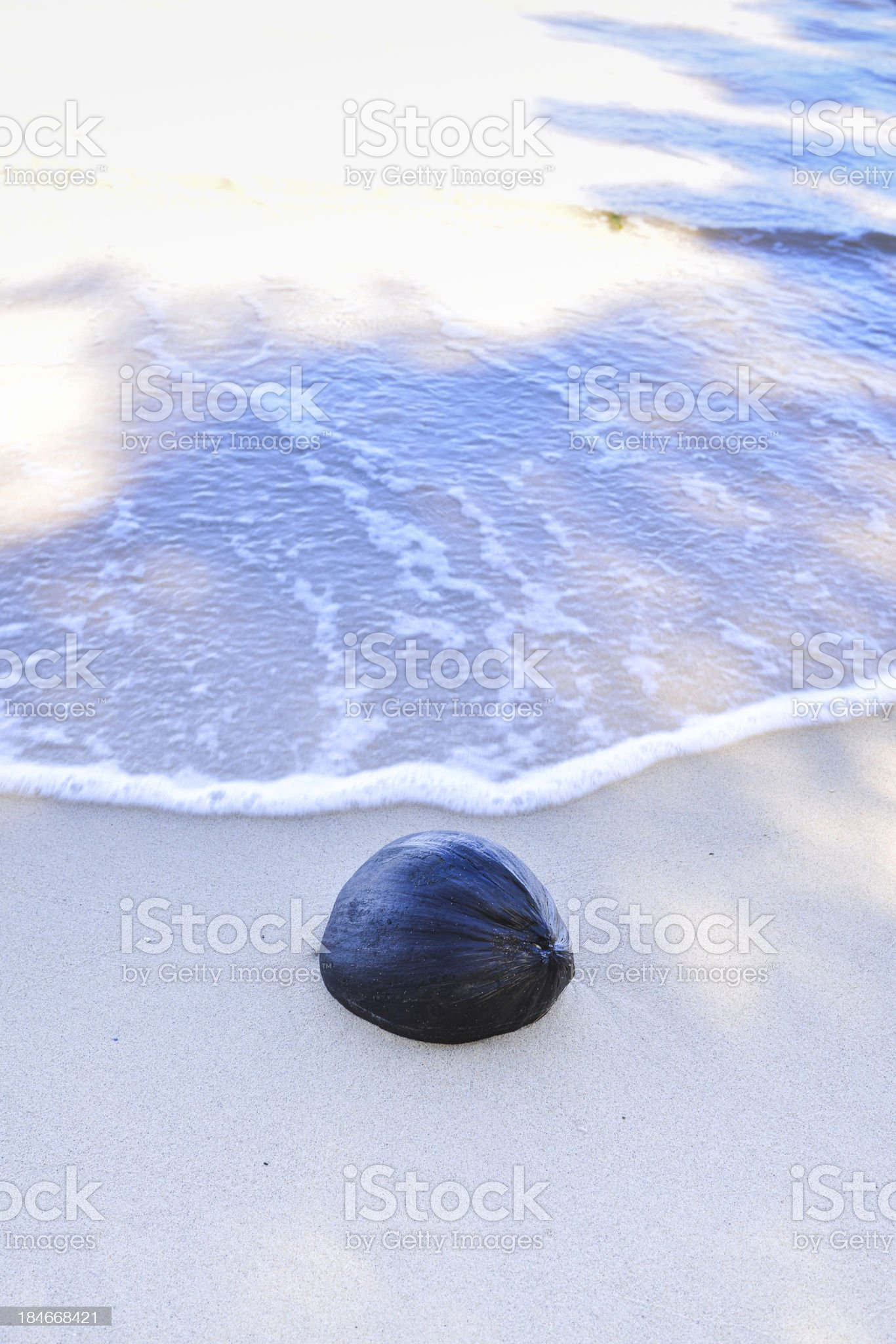 Dried Coconut in the beach royalty-free stock photo