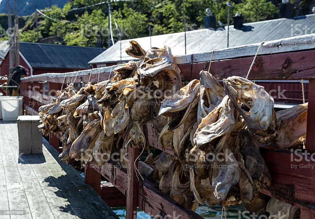 Dried cod heads royalty-free stock photo