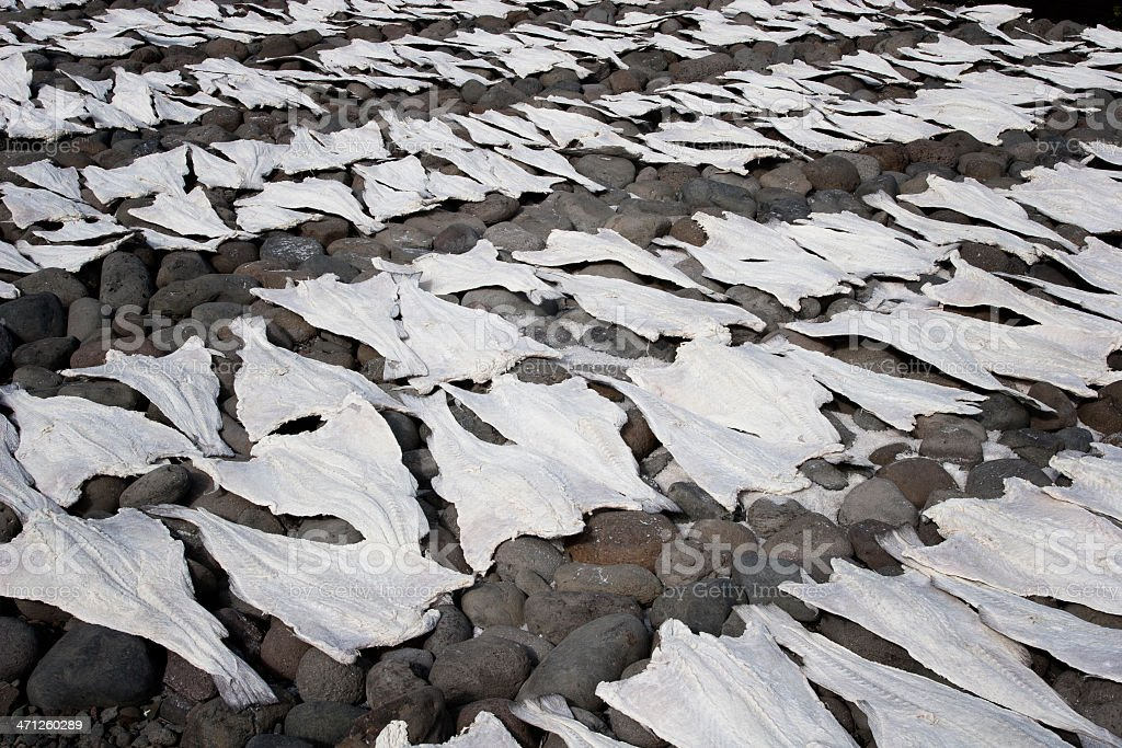 Dried cod stock photo