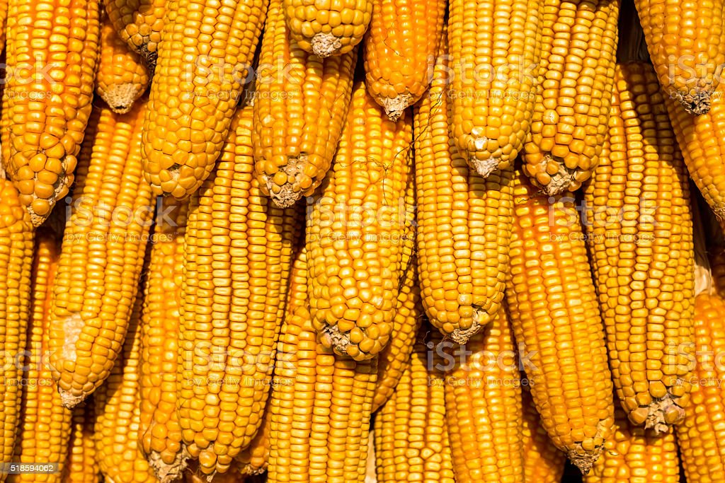 Dried corn background stock photo