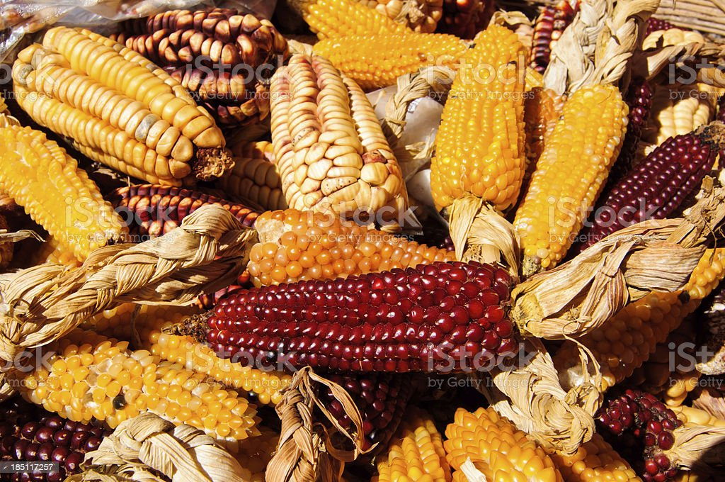 Dried Corn from above royalty-free stock photo