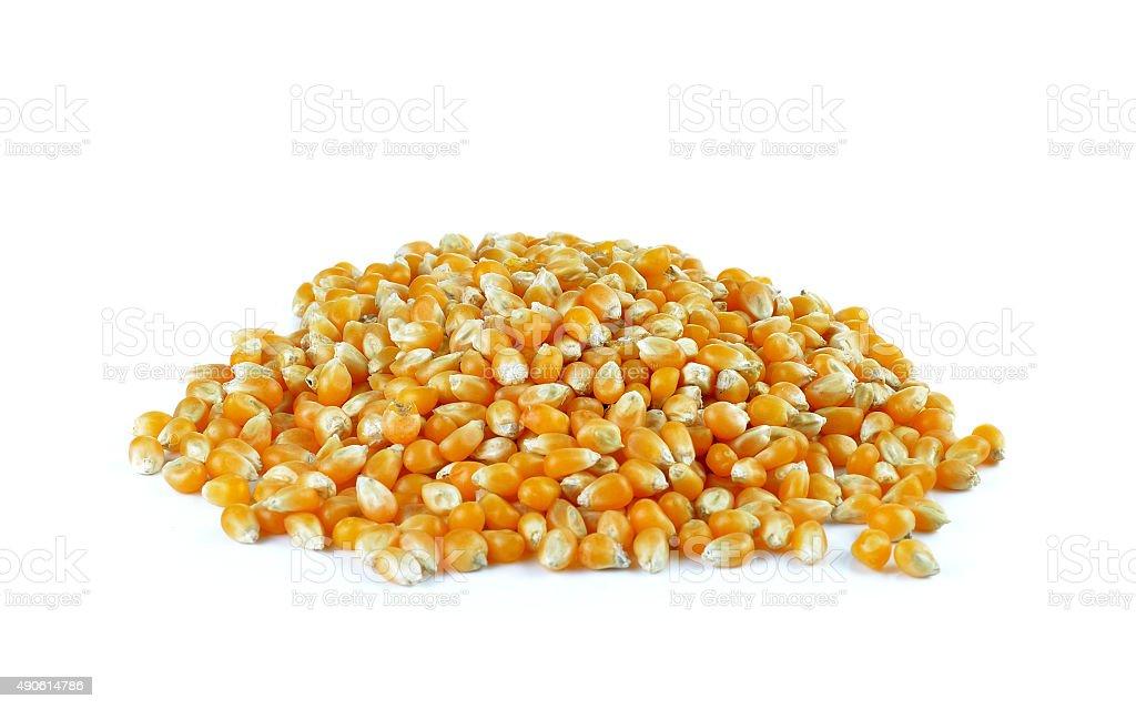Suszone kukurydzy na białym tle zbiór zdjęć royalty-free
