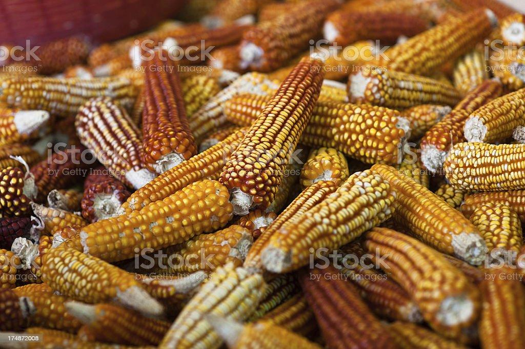 Dried corn royalty-free stock photo