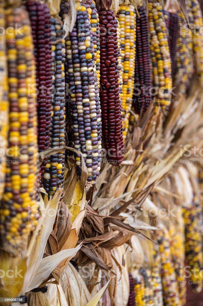 Dried Corn Portrait stock photo