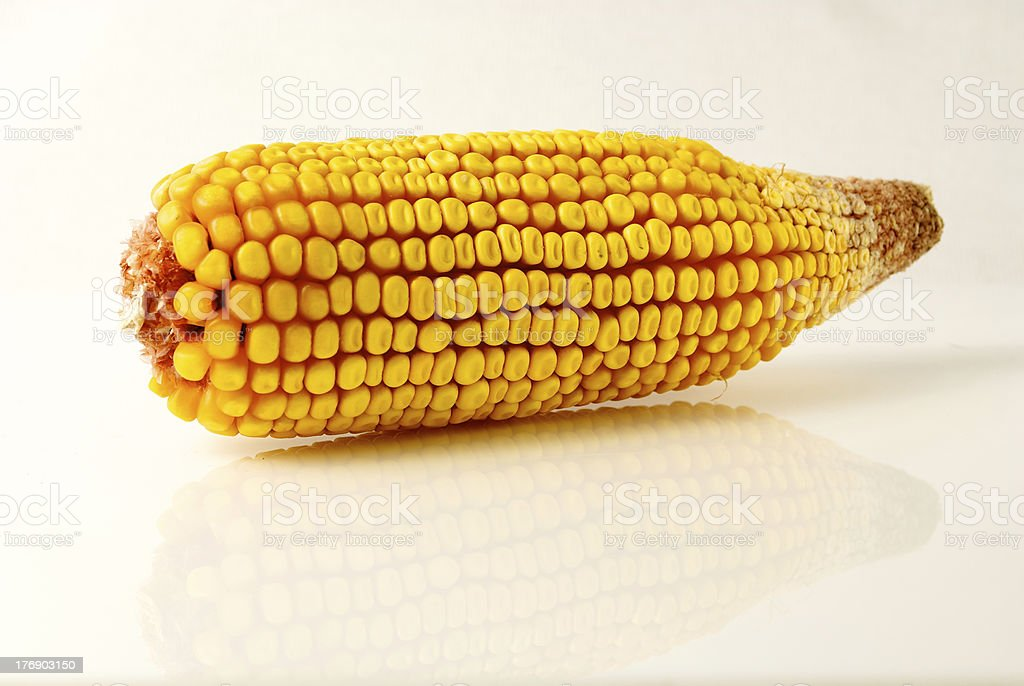 Dried Corn with Reflection stock photo