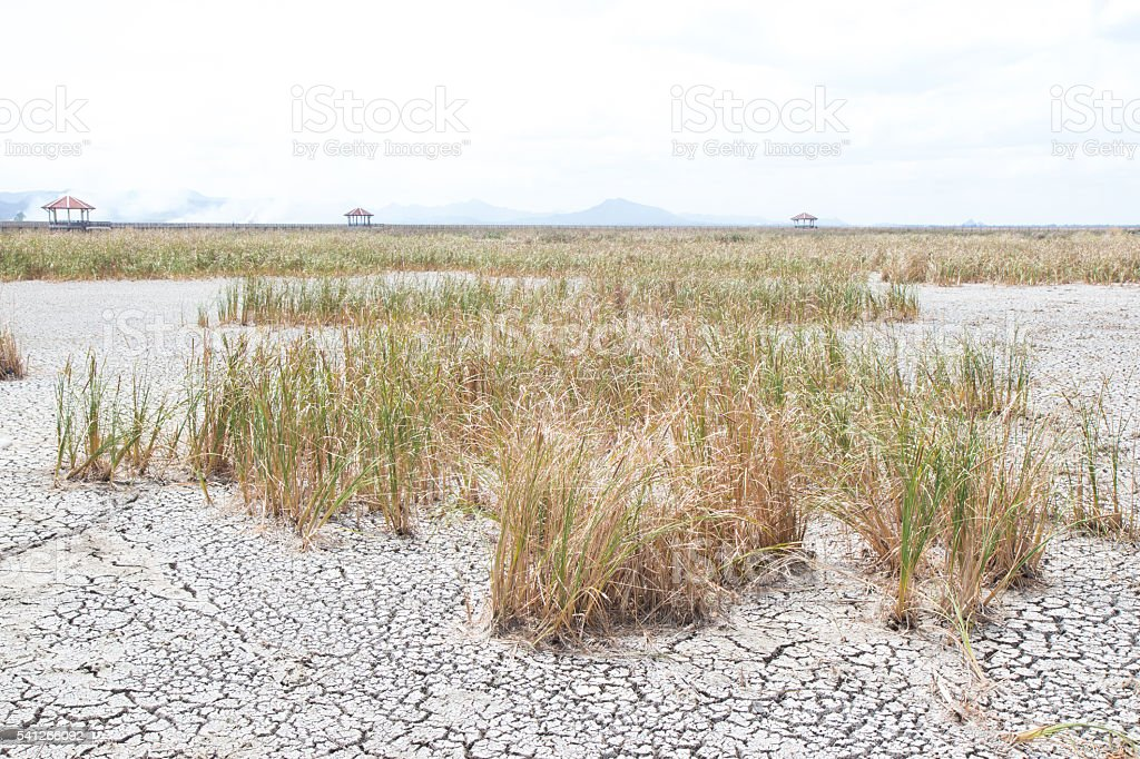 dried dead grass on dry earth and cracked ground texture Стоковые фото Стоковая фотография