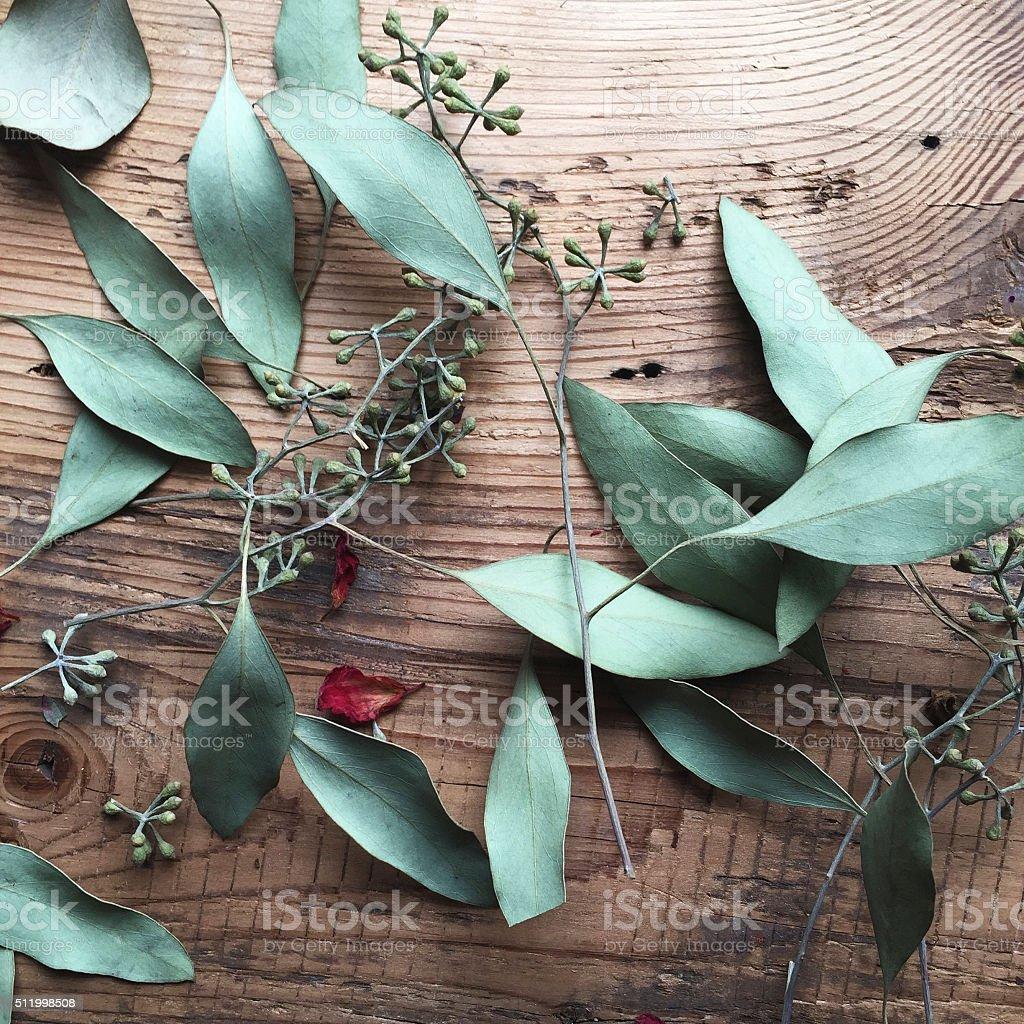 Dried Eucalyptus on Wood stock photo