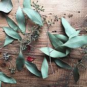 Dried Eucalyptus on Wood
