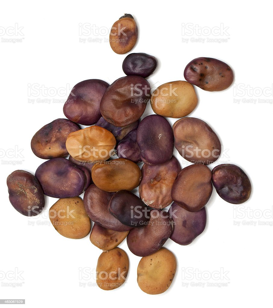 dried fava beans royalty-free stock photo